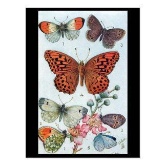 Cartão velho - borboletas