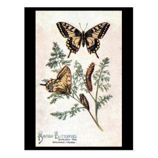 Cartão velho - cauda da andorinha
