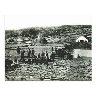 Cartão velho - Terra Nova, bacalhau de secagem