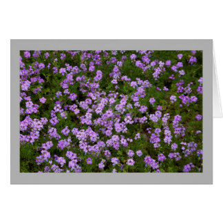 Cartão Verbenas roxos da flor 45