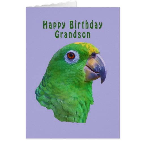 Cartão verde do aniversário do papagaio, neto
