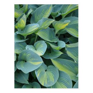 Cartão verde do impressão da planta do hosta