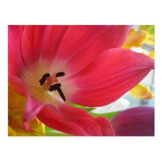 Cartão vermelho romântico da tulipa