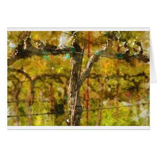 Cartão Vinhas no primavera em Napa Valley Califórnia