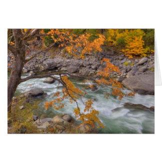 Cartão WA, floresta nacional de Wenatchee, árvore de