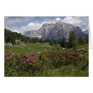 Cartão Wildflowers e as montanhas da dolomite, Italia
