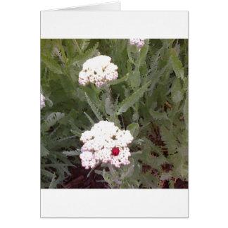 Cartão Yarrow com joaninha