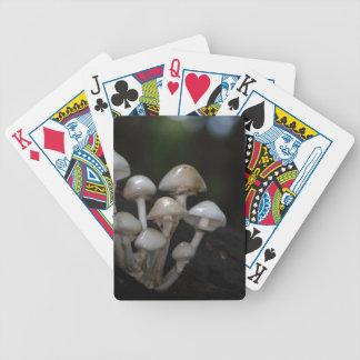 Cartas De Baralho Fungo da porcelana, mucida de Oudemansiella