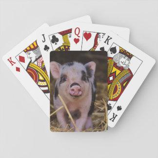Cartas De Baralho Porco bonito doce