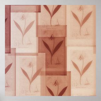 Cartaz botânico do vintage pôster