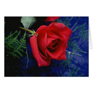 Cartões cor-de-rosa da elegância