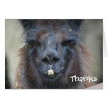 Cartões de agradecimentos animais da fotografia do