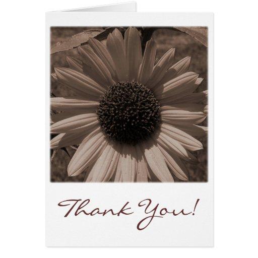Cartões de agradecimentos antigos do girassol