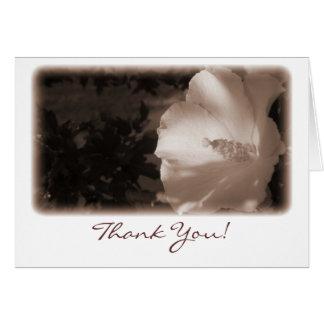Cartões de agradecimentos Antiqued da glória