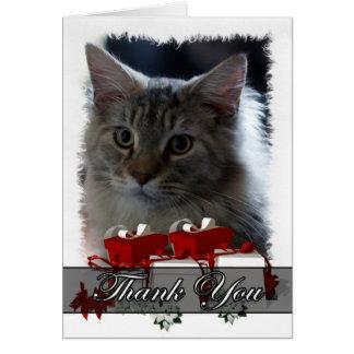Cartões de agradecimentos com o gatinho do racum d
