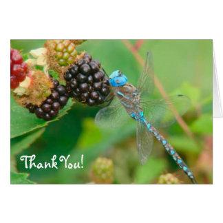 Cartões de agradecimentos das framboesas da libélu