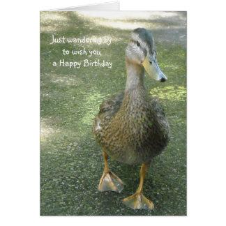 Cartões de aniversários de vagueamento do pato