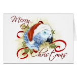 Cartões de Natal do papagaio do cinza africano