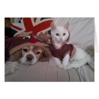 Cartões de Natal festivos do animal de estimação d