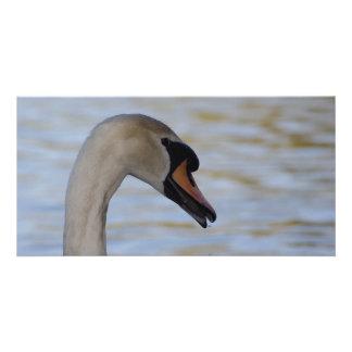 Cartões de nota do close up da cisne cartão com foto