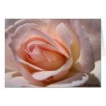 Cartões de nota do rosa do rosa