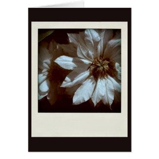 Cartões de simpatia florais da fotografia do Clema