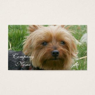 Cartões de visitas do yorkshire terrier