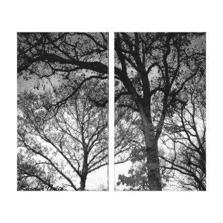Carvalhos preto e branco no inverno impressão de canvas esticada
