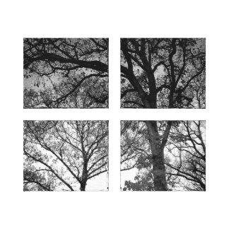 Carvalhos preto e branco impressão em canvas