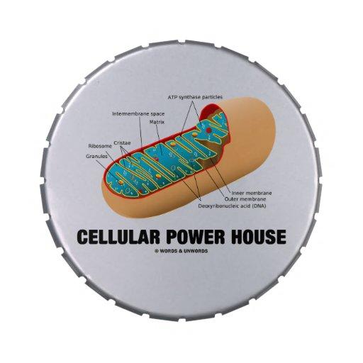 Casa celular do poder (Mitochondrion) Latinhas Personalizadas