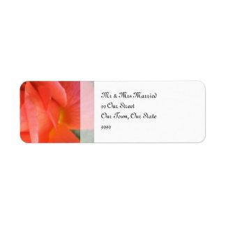 Casamento cor-de-rosa do verão etiqueta endereço de retorno