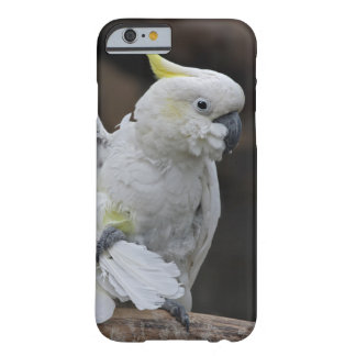 Caso Preening do iPhone 6 do Cockatoo Capa Barely There Para iPhone 6