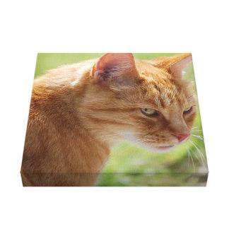 Cat gato bate-papo - Photography Louis Glineur Impressão Em Tela