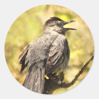 Catbird cinzento que canta sua etiqueta da canção