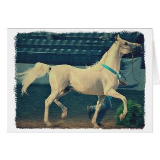 Cavalo árabe da mostra cartao