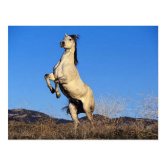 Cavalo Bucking Cartão Postal