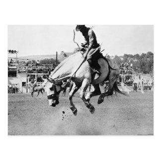 Cavalo bucking da equitação do homem no rodeio cartão postal