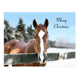 Cavalo do Feliz Natal Cartão Postal