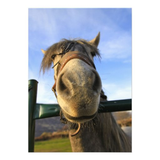 Cavalo engraçado convite