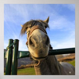 Cavalo engraçado posters