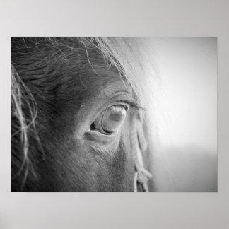 Cavalo mágico preto e branco pôster