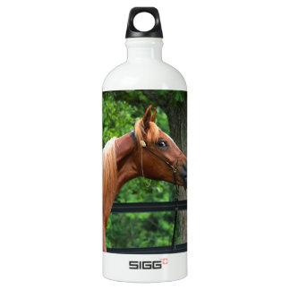 Cavalo nacional da mostra