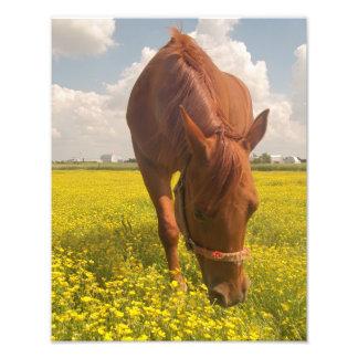 Cavalo no impressão da foto do campo