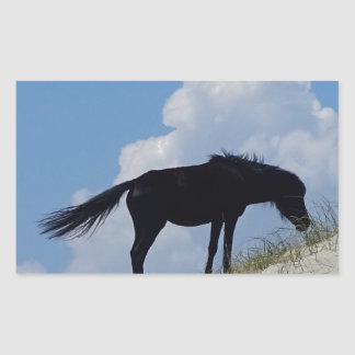 Cavalo selvagem em OBX Adesivo Retangular