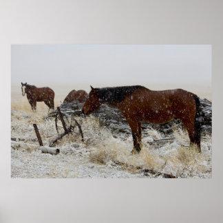 Cavalos em um dia nevado - pelo cargo velho do car posteres