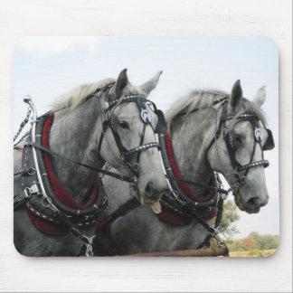 Cavalos engraçados mouse pad
