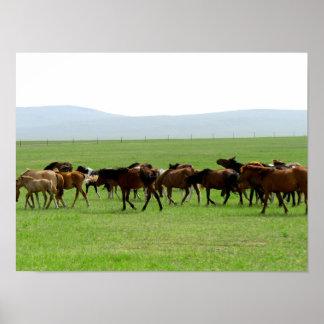 Cavalos no pasto - fotografia da paisagem poster
