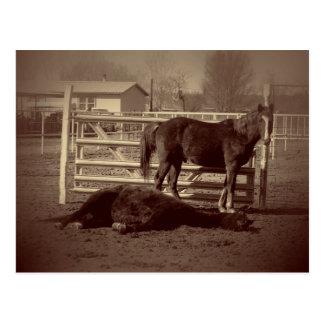 Cavalos preguiçosos cartão postal