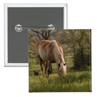 Cavalos que pastam no prado, angra de Cades, excel Bóton Quadrado 5.08cm