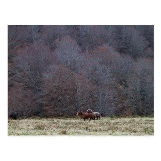 Cavalos Running, cartão do Europa de Picos a Dinam Cartões Postais
